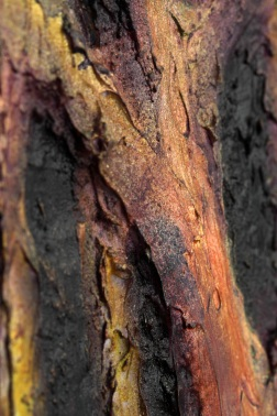 2008 - Divergence (Tree Trunk Detail 2)