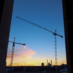 Four Cranes at Sunset