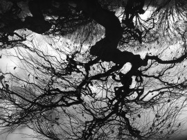Root Reflection 2