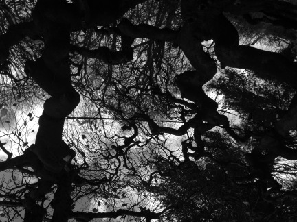 Root Reflection 1